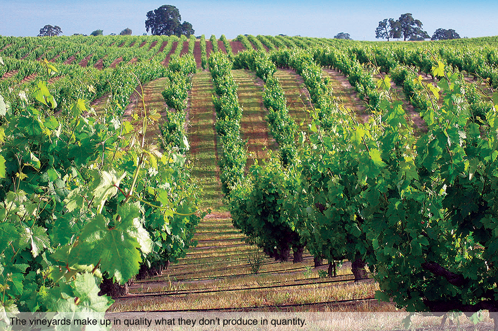 The vineyards make up in quality what they don't produce in quantity.