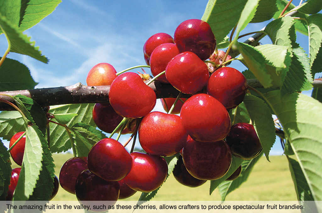 The amazing fruit in the valley, such as these cherries, allows crafters to produce spectacular fruit brandies.