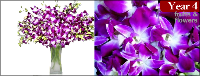 20 Purple Dendrobium Orchids with Vase